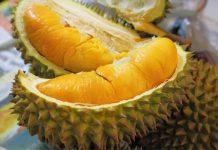 fakta-durian