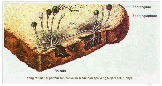 ilustrasi Roti berjamur