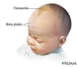 letak frontanelle pada bayi. courtesy of healthtap.com/